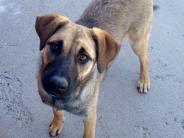 Photo of Lady dog