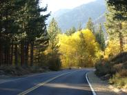Lundy Canyon Road Fall Colors
