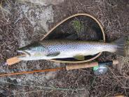 Fishing the Bridgeport Area