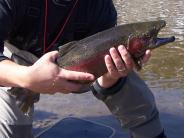 Fishing the East Walker River