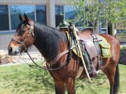 """Mounted Patrol Horse """"Bigun"""""""