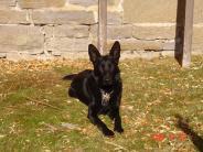 MCSO Canine Program